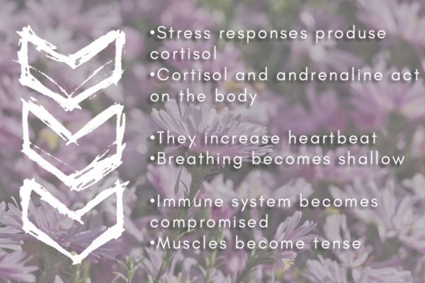 The Benefits of Meditation & Why It Can Help You With Stress